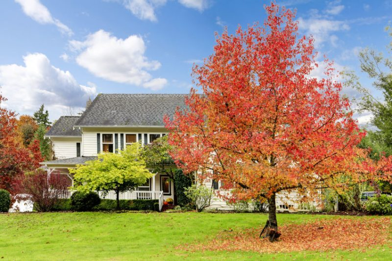 Fall Pest Control Made Easy | Raven Termite and Pest Control