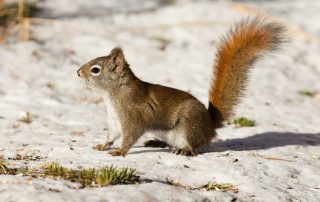 Critter Control | Raven Termite & Pest Control