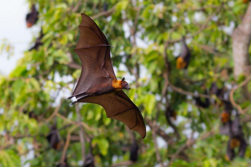 Bat Removal | Raven Termite & Pest Control