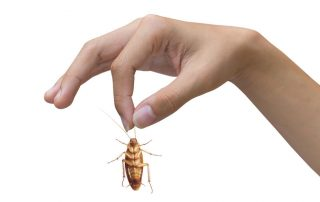 Roach Control in Baltimore City | Raven Termite & Pest Control