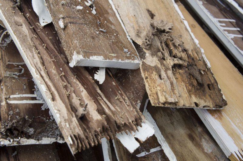 Termite Control in Montgomery County | Raven Termite & Pest Control