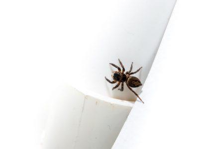 Spider Control | Raven Termite & Pest Control