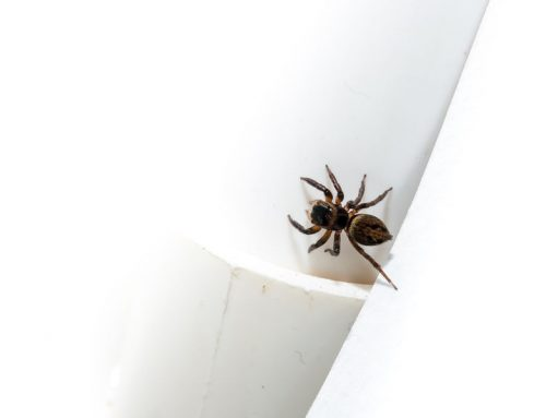 Spiders love Summer But You Don't Have to Love Spiders. Learn Some Spider Control Tips Today