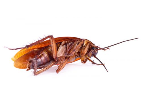 The Heat is Still Here, Get Rid of Roaches Now