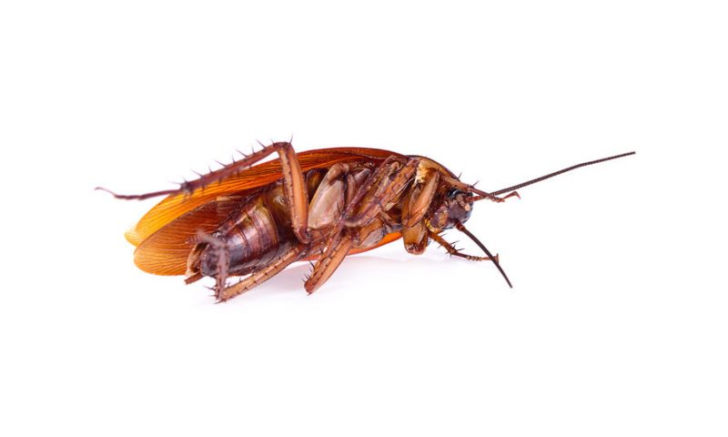 Get Rid of Roaches | Raven Termite and Pest Control