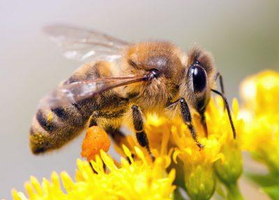 Eliminate Bees | Raven Termite & Pest Control