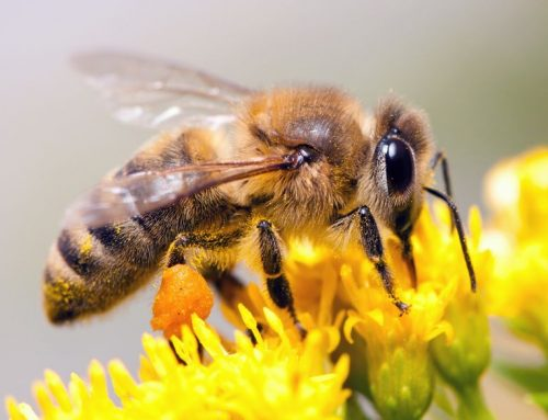 Eliminate Bees from Your Home with Raven Termite and Pest Control in Towson