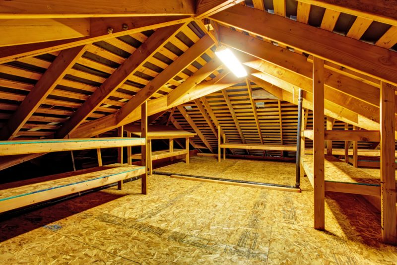 Could That be a Bat in the Attic? Get Rid of Bats with Raven Termite | Raven Termite and Pest Control