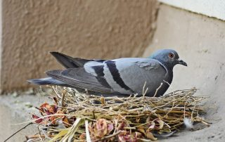 bird control - raven termite and pest control