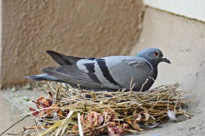 bird control - raven termite and pest control