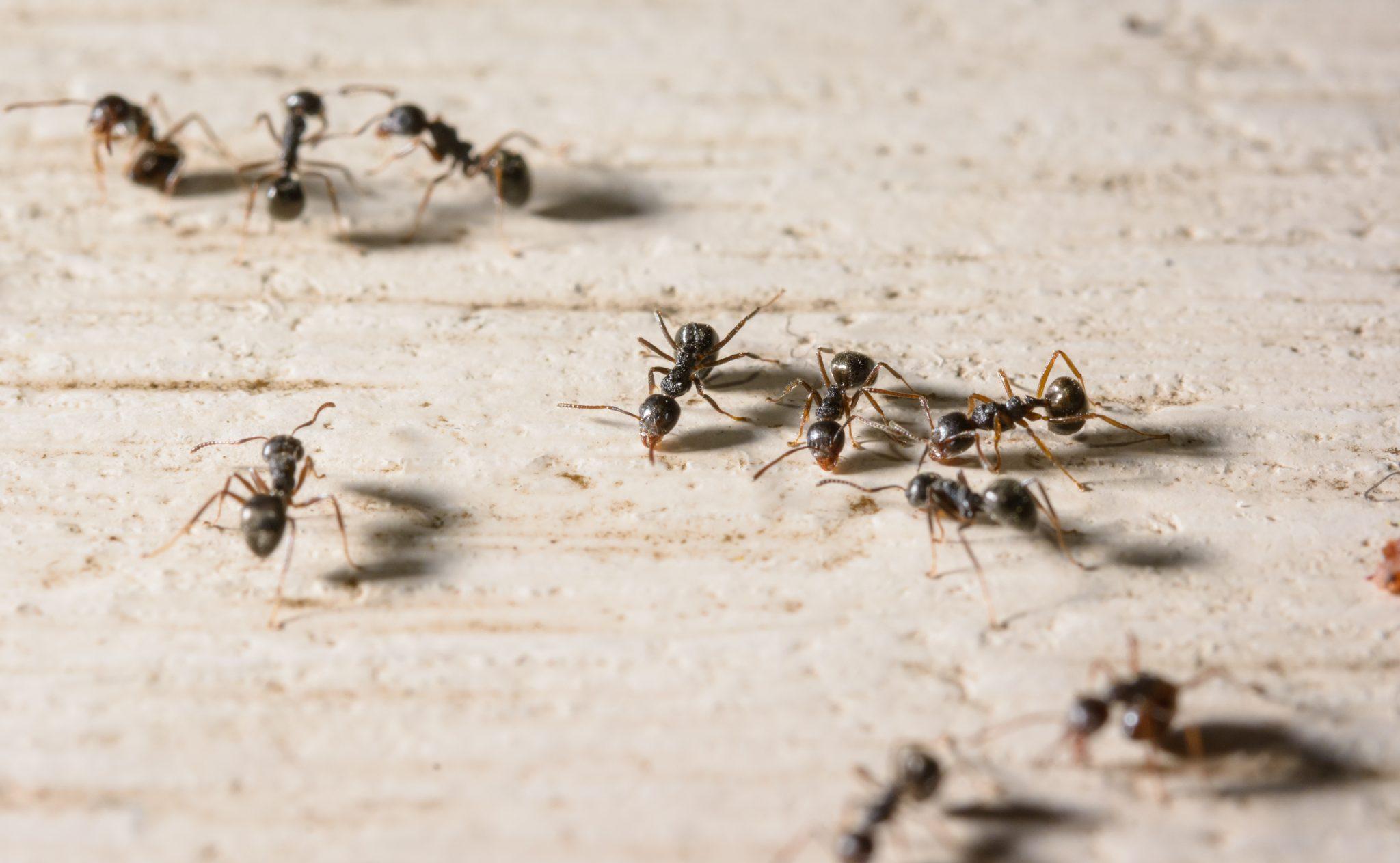 exterminators in Anne Arundel County -- Raven Termite and Pest Control