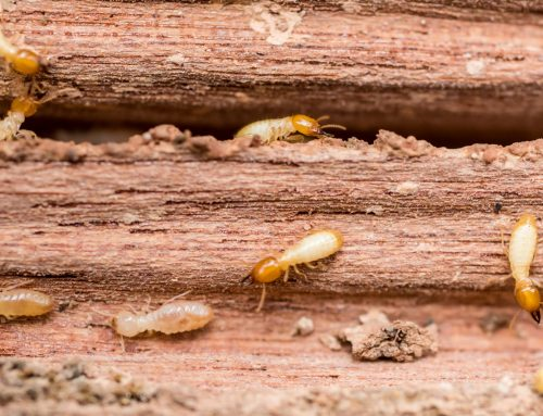 What Happens to Termites During the Winter?