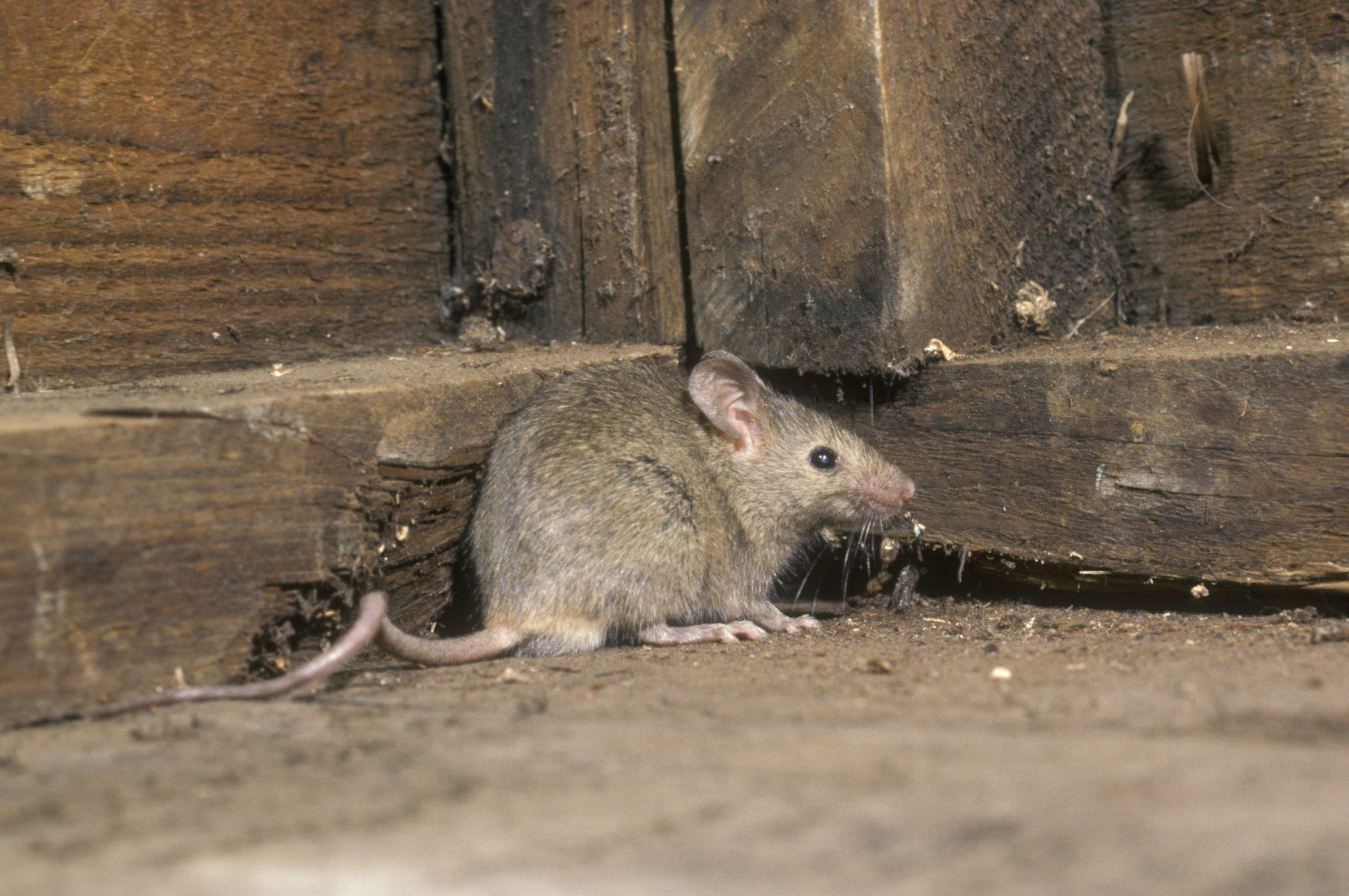 exterminators in Bel Air -- Raven Termite