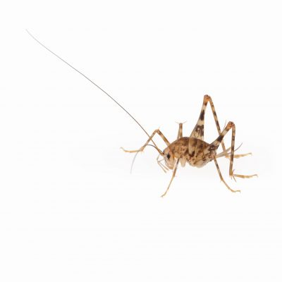 pest control in anne arundel county -- raven termite and pest control