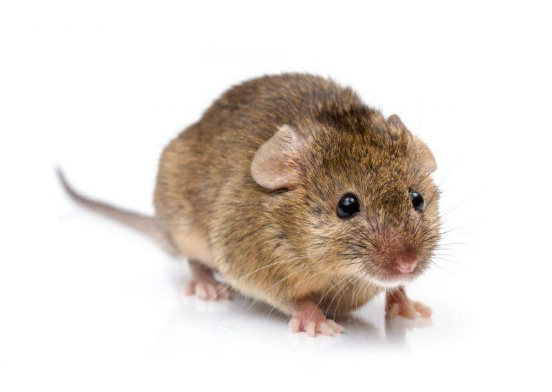 exterminators in Ellicott City -- Raven Termite and Pest Control