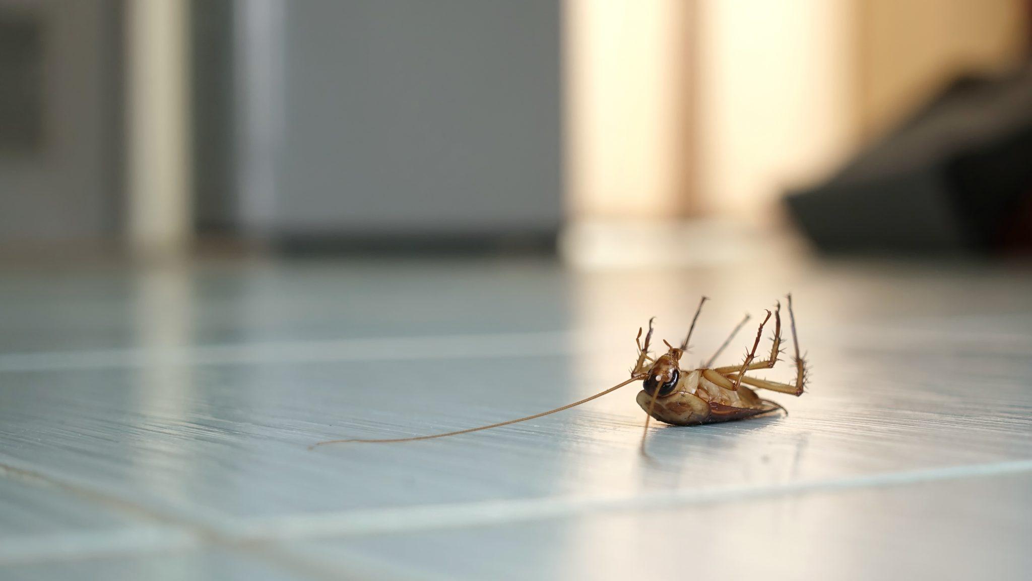 exterminators in Towson -- Raven Termite and Pest Control