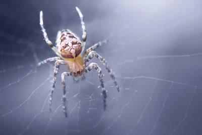 pest control in Bel Air - Raven Termite & Pest Control