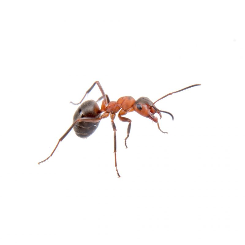 pest control services in Lutherville -- Raven Termite and Pest Control