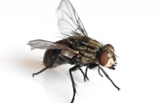 pest control in bel air -- Raven Termite and Pest Control