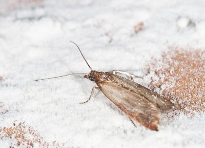 pest control in Montgomery County -- Raven Termite and Pest Control