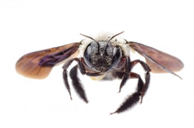 pest control services in anne arundel county -- Raven Termite and Pest Control
