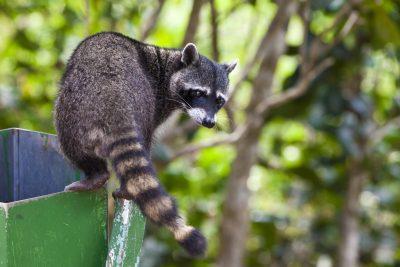 exterminators in Columbia --Raven Termite and Pest Control