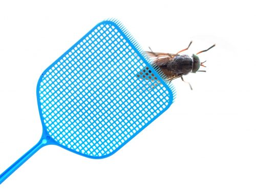 Keep Flies Outside this Summer