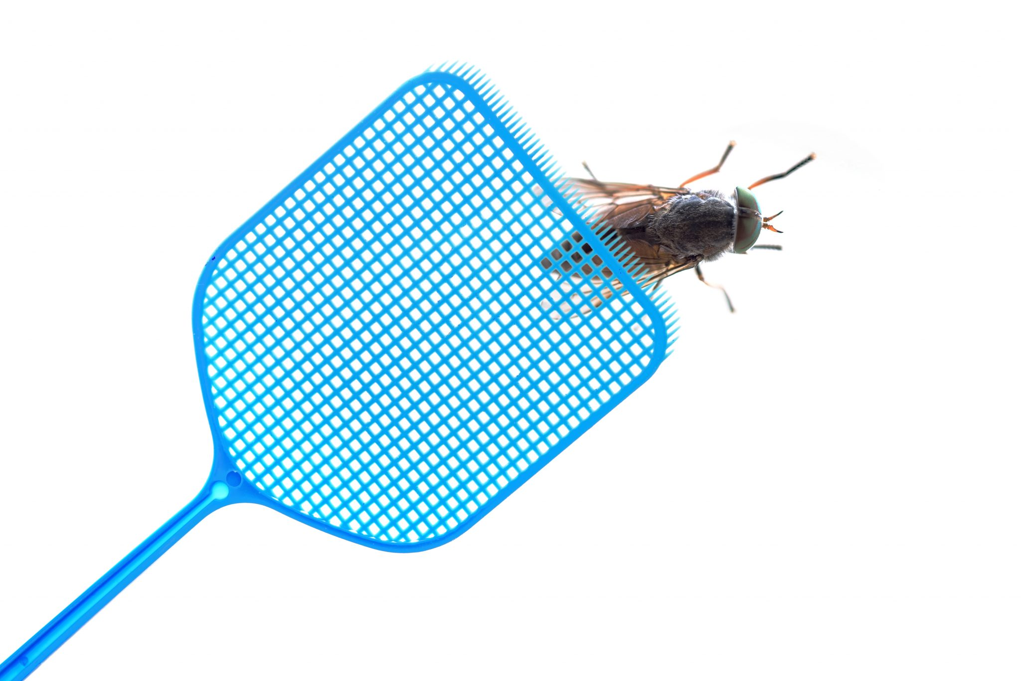 exterminators in Harford County -- Raven Termite and Pest Control