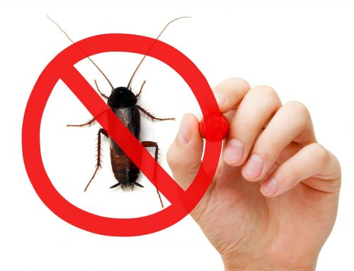 Pest Control Plans for Home and Business Owners