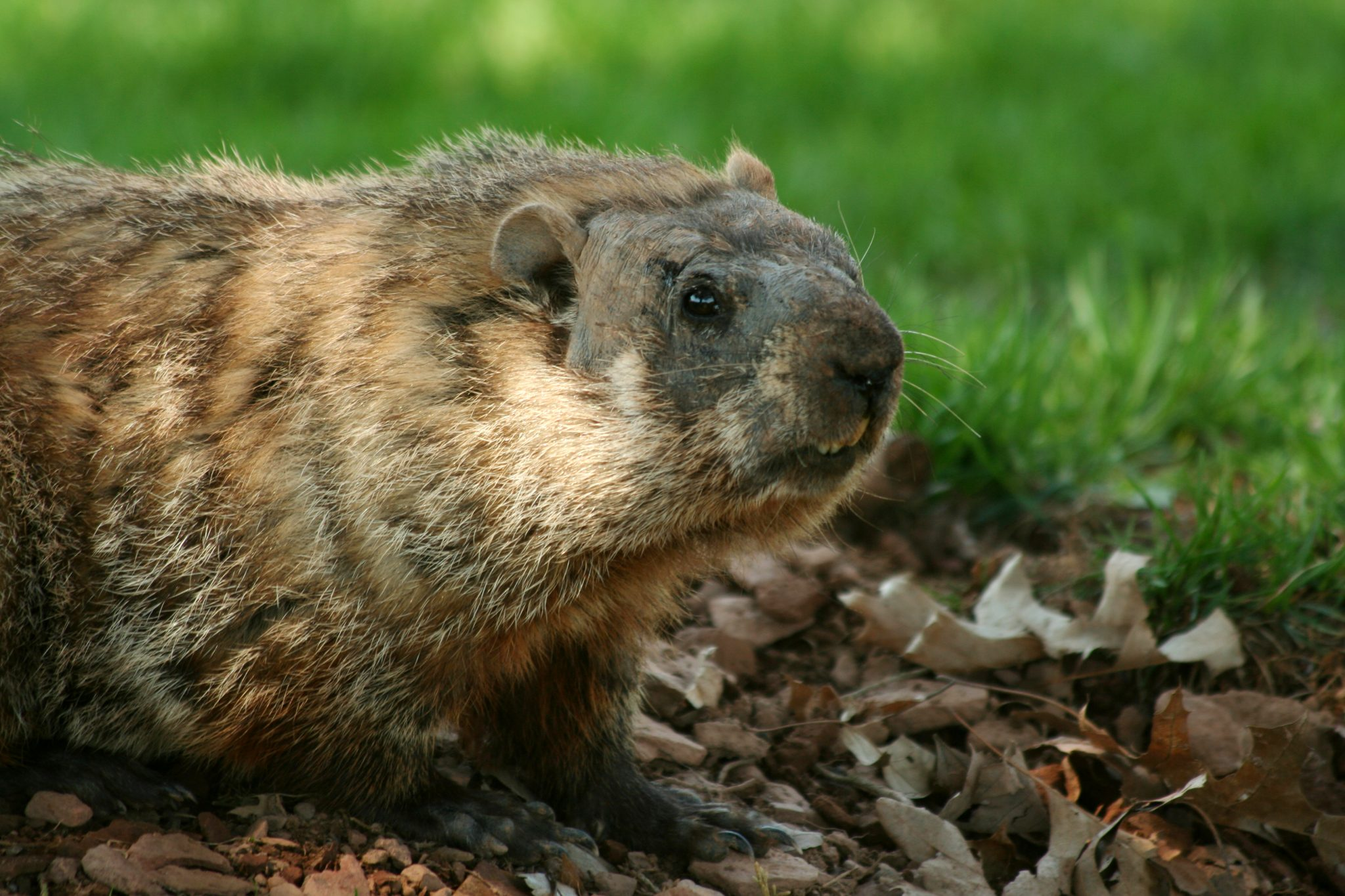 pest control services in annapolis -- Raven Termite and Pest Control