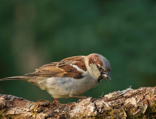 Exterminators Get Rid of Nuisance Birds