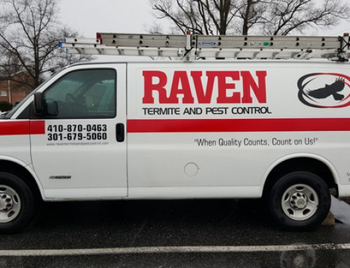 Raven Termite and Pest Control Uses Environmentally Friendly Treatments