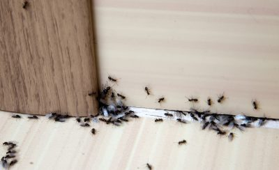 pest control in Prince George's County -- Raven Termite and Pest Control