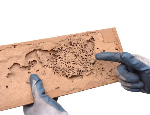 Termite Control Prevents Costly Damage
