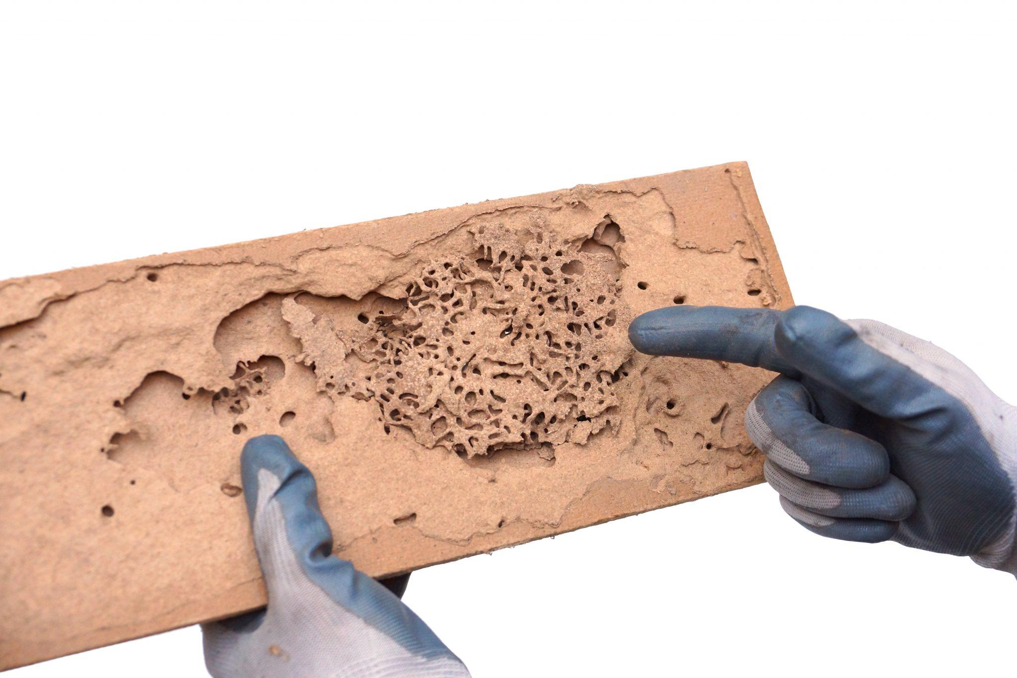 termite control in Baltimore -- Raven Termite and Pest Control