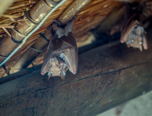 Bats? Pest Control Professionals Can Help!