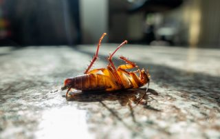 pest control services in Reisterstown -- Raven Termite and Pest Control