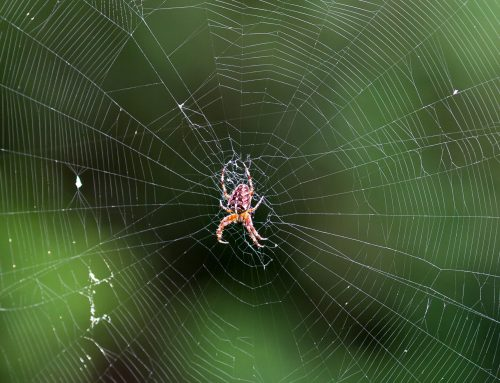 Exterminators Battle Spider Infestations
