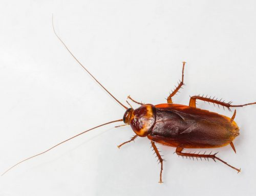 Don't Let Roaches Overwinter in Your Home
