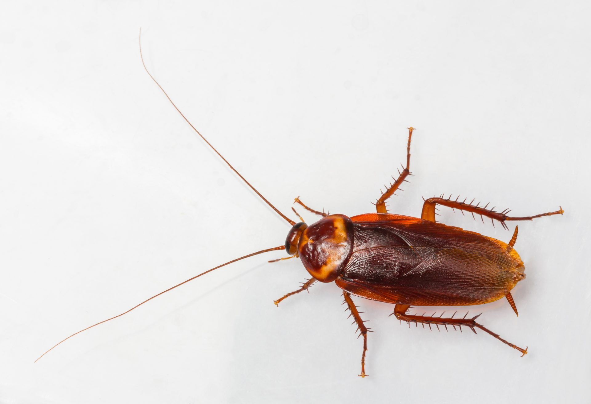 pest control in Hyattsville -- Raven Termite and Pest Control