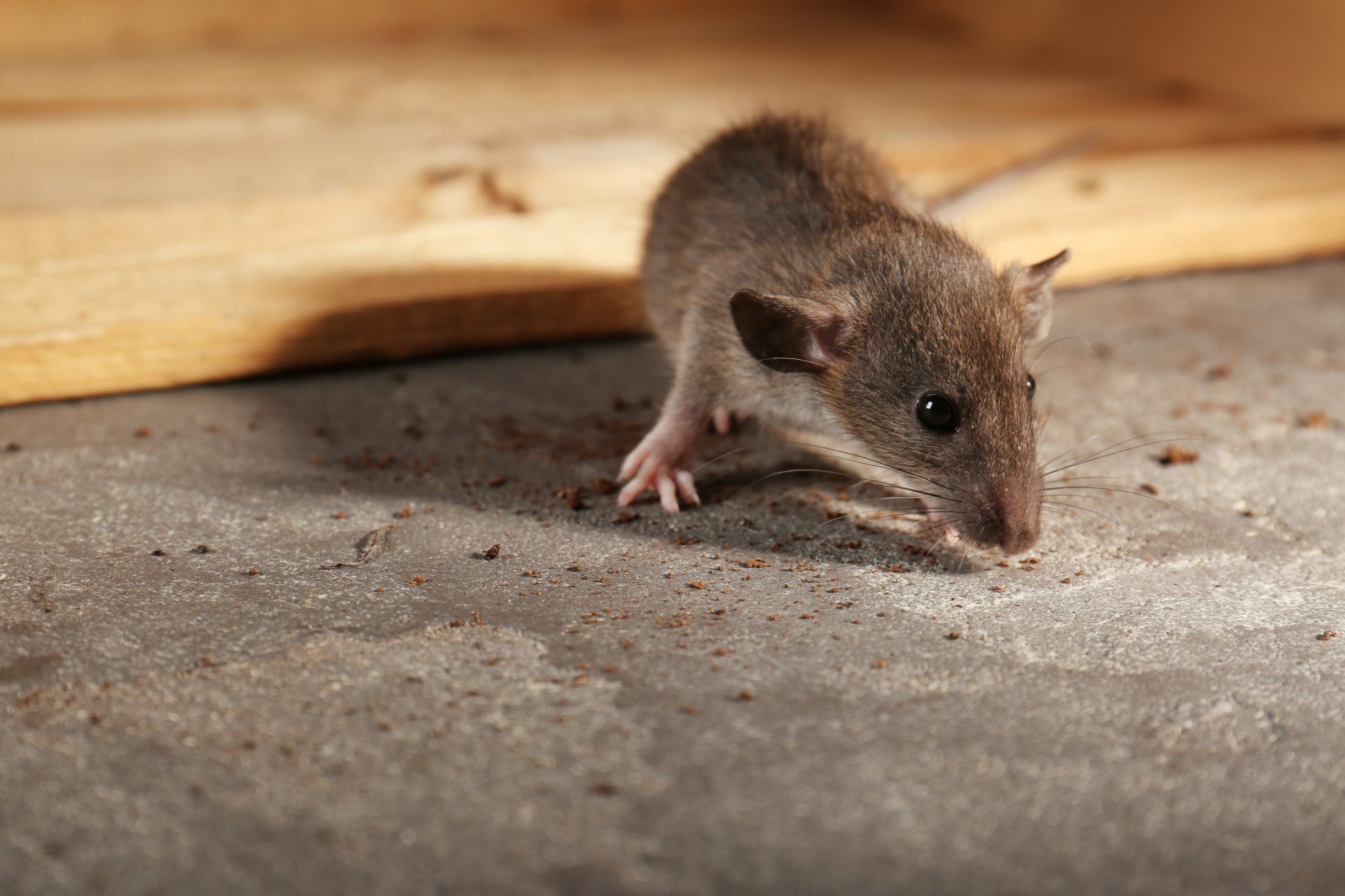 exterminators in Howard County -- Raven Termite and Pest Control