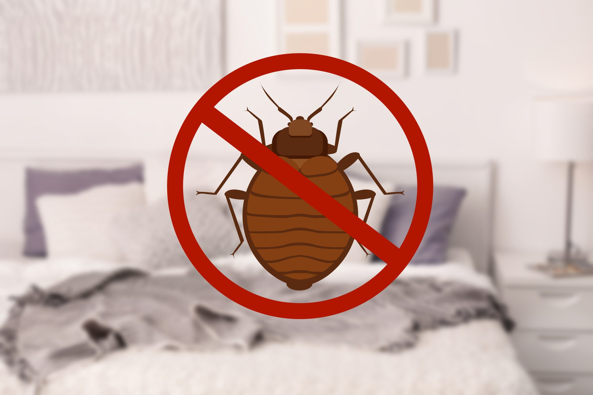 bed bug exterminator in Howard County -- Raven Termite and Pest Control