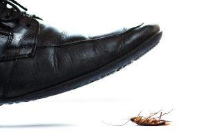 exterminators in Baltimore County -- Raven Termite and Pest Control