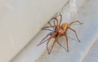 pest control in Severna Park -- Raven Termite and Pest Control