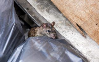 exterminators in Hunt Valley -- Raven Termite and Pest Control