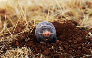 exterminator in ellicott city -- Raven Termite and Pest Control