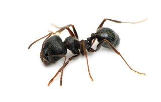 pest control in Lutherville-Timonium -- Raven Termite and Pest Control