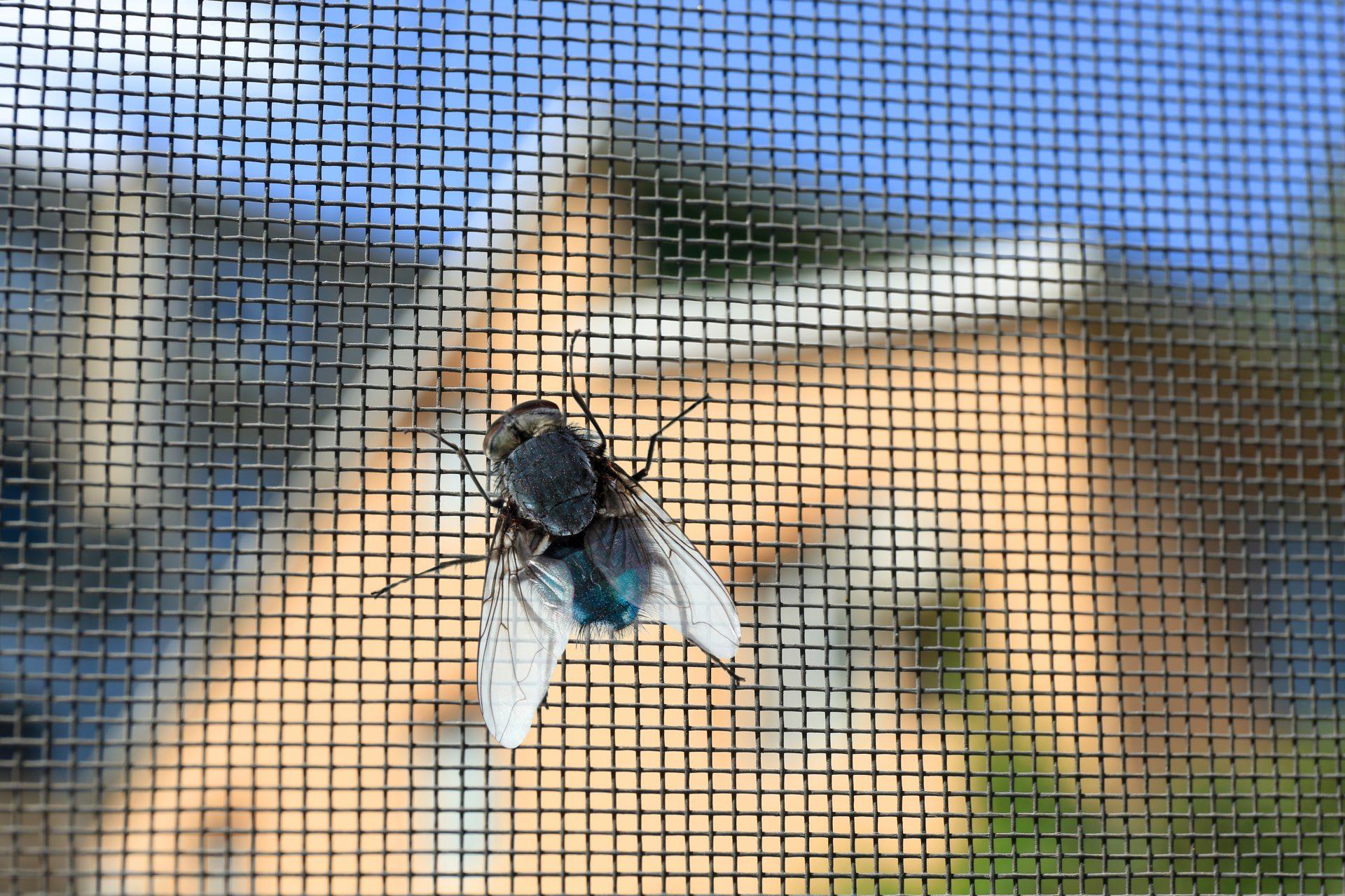 exterminator in Edgewood -- Raven Termite and Pest Control