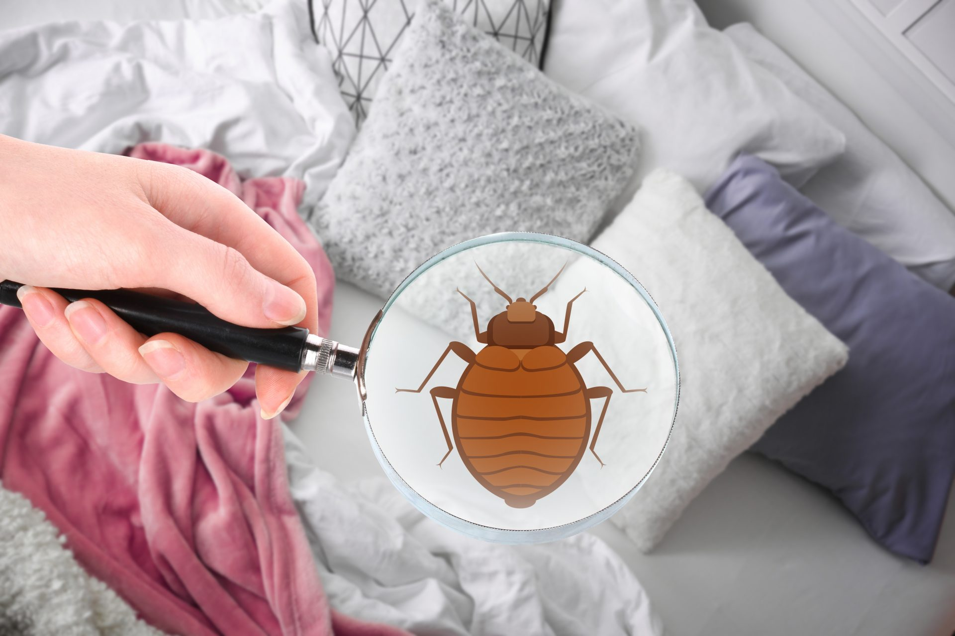 bed bug exterminator in Balitmore City -- Raven Termite and Pest Control