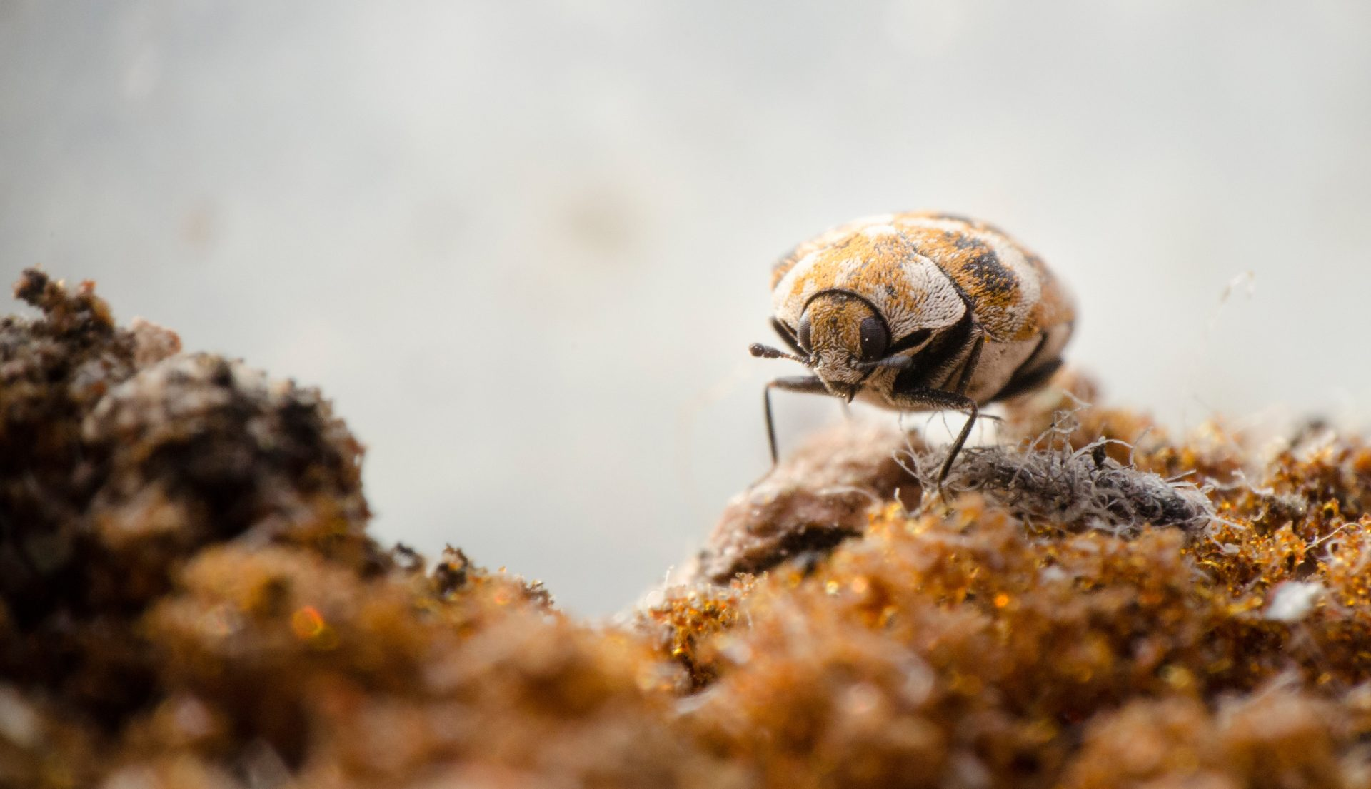 pest control in Annapolis - Raven Termite and Pest Control